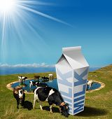 pic of milk  - Cows grazing in the mountains with white milk carton with text Milk - JPG