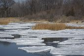 image of shoreline  - A view of ice floes on a marshy shoreline - JPG