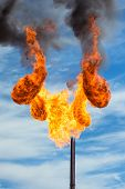 stock photo of torches  - Huge flame of a torch from burning of associated gas - JPG