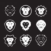 stock photo of lions-head  - Vector group of an lion head design on black background - JPG