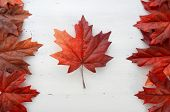 stock photo of happy day  - Happy Canada Day red silk leaves in shape of Canadian Flag on white shabby chic wood table - JPG