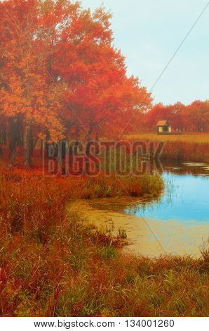 Autumn foggy landscape -lonely small house near the old autumn oak grove in foggy cloudy weather. Picturesque autumn landscape view.