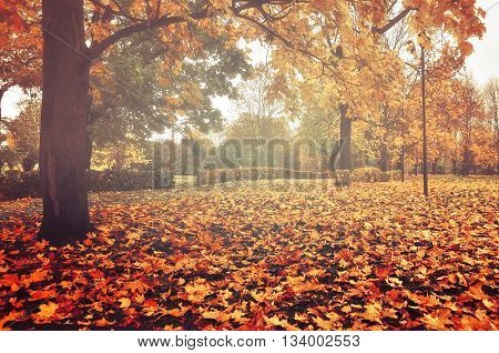 Foggy autumn landscape - autumn bare trees with autumn fallen leaves in the park in dense fog colored landscape autumn view soft focus applied