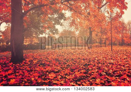 Foggy autumn landscape - autumn bare trees with autumn fallen leaves in the park in dense fog picturesque landscape autumn view creative filter applied