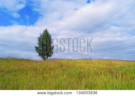 Lonely tree in grass field and cloudy sky