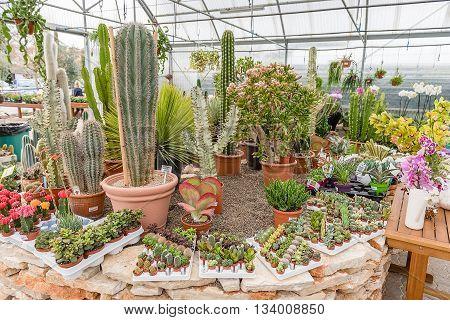 Mix Of Succulent Plants Inside A Greenhouse