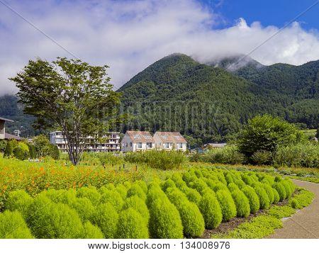 Beautiful Landscape Around Lake Kawaguchi