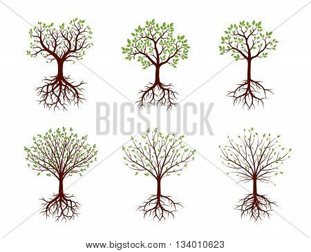 Set of Color Trees and Roots. Vector Illustration.