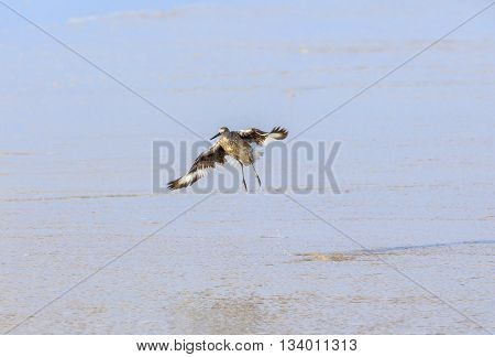 wild seagull at the coast in america