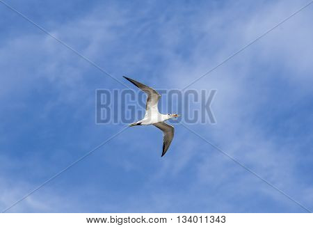 Seagulls Flying In The Blue Sky At The Ocean