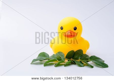 Yellow rubber duck toy with white background