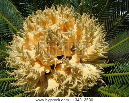 A palm tree flower with a insect crawling inside for no reason