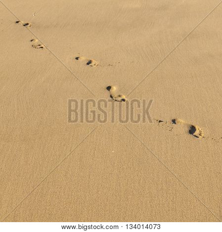 Human Footsteps At The Beach