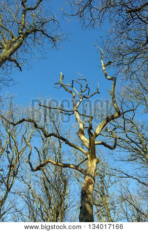 Crown Of Trees Under Blue Sky In The Forest