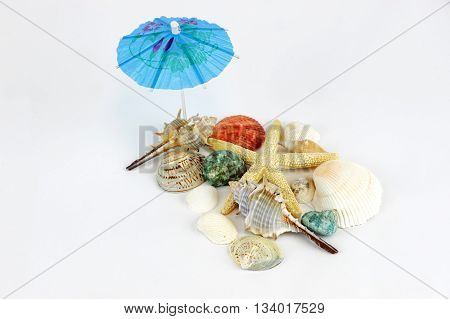 sea shells, sea stars and snail on white background