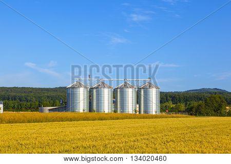 four silver silos in corn field under blue sky