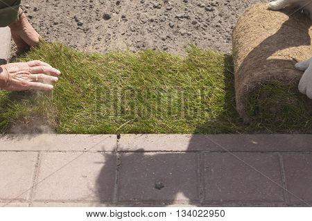 rolls of grass lawn green laying in a city park