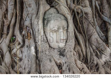 Head of Buddha statue in the tree roots at Wat Mahathat temple