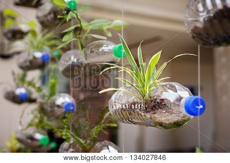 Empty plastic bottles use as a container for growing plant recycling green concept horizontal composition