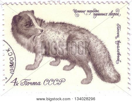 Ussr - Circa 1980: A Stamp Printed In The Ussr Shows Fur Arctic Fox, Circa 1980