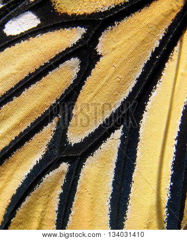 Monarch butterfly wing pattern close up with bold black lines, orange coloration, and white spot. Wing scales visible if image is enlarged.