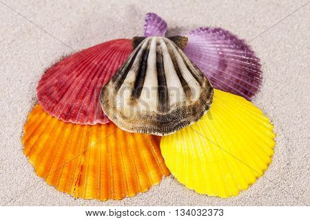 some colorful sea shells of mollusk on sand close up
