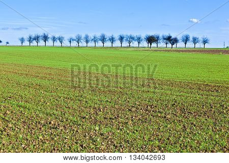 Freshly Ploughed Acre With Row Of Trees At The Horizon