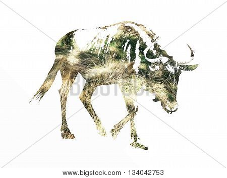 Silhouette of Blue wildebeest - Connochaetes taurinus filled with dried grass scheme. Vector graphic. Natural theme. Antelope stencil. Mammal theme. Cutout stencil animal. Yellow reflections. The great migration of animals.
