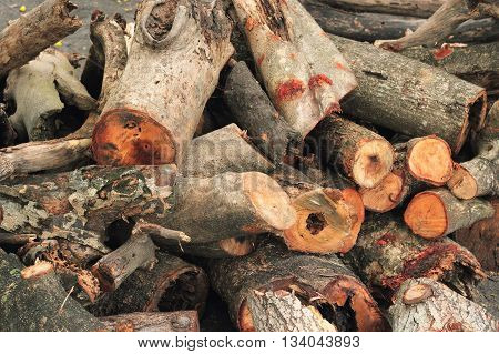 dry timber texture. pile of cut timber