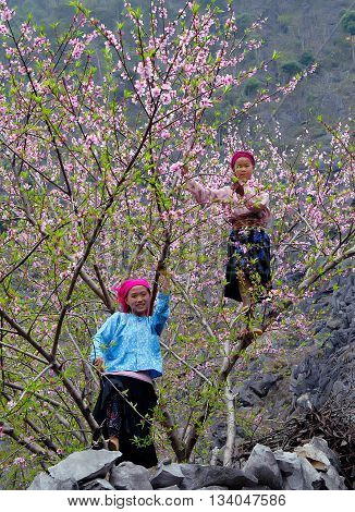 HA GIANG, VIETNAM, February 18, 2016 two ethnic Hmong teenager, Ha Giang mountainous areas, promenade gardens, called peach flowers, spring