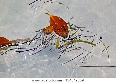 Leaves In Water In Beautiful Composition With The Sea