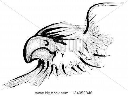golden eagle isolated on a white background
