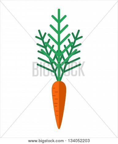 Carrot icon. Yummy orange carrot vegetable. Flat carrot on white background - vector stock.