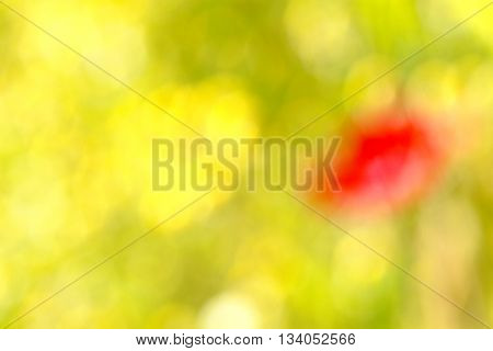 pictureof a natural spring background of chamomile and poppy colors