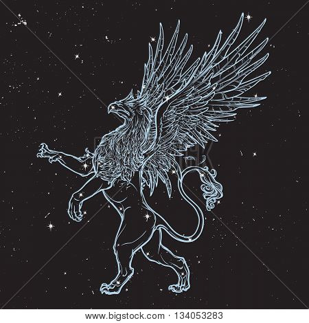 Griffin, griffon, or gryphon legendary creature from Greek mythology. Sketch on black nightsky beckground with stars. Vintage design. EPS10 vector illustration.