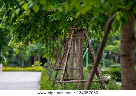 Trees with support stakes planted in rows in an urban park. Urban green lifestyle concept.