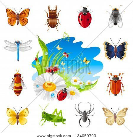 Insect summer nature icon set with illustration for design. Chamomile flowers, ladybugs, green grass and blue sunny sky. Butterfly, beetle, ladybug, june beetle, dragonfly, bee, grasshopper, spider
