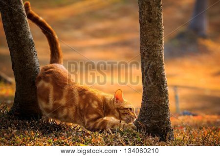 domestic orange fur cat relaxing in park with beautiful morning ligh