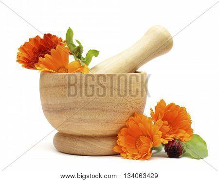 Alternative medicine and herbal treatment - Calendula flowers