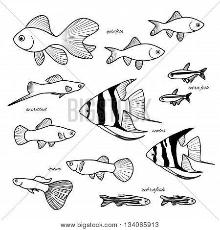 Aquarium Hand Drawn Fish Set Isolated