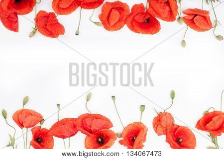 Heads of red poppies on the bottom and on top of white background flat lay