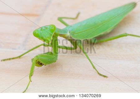 closeup green praying mantis on wooden background. Mantis religiosa. Selective focus