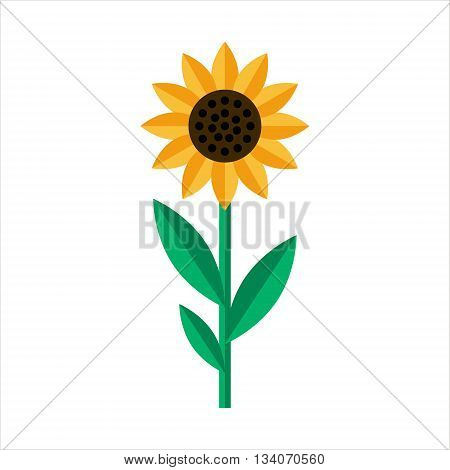 Sunflower icon isolated. Flat Sunflower on white background