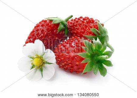 Alpine Strawberry (fragaria Vesca)