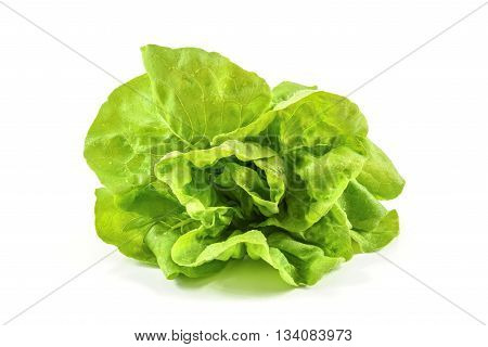 Close up of tasty and moist lettuce isolated on white background
