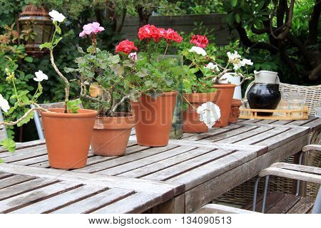Potted geraniums and a serving tray with a stoneware jug and glasses on a rustic picnic table outside.