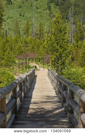 Wood bridge hiking trail path crossing river in scenic natural outdoors park green pine trees