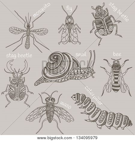 Hand drawn beetles set. Insects for design icons logo print or else. Bee mosquito wasp snail caterpillar and two stag beetles one fly. Vector illustration.