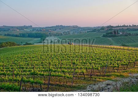 Tuscan vineyard at sunrise, vine spraying is underway