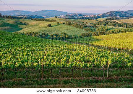 Tuscan vineyard at sunrise, calm spring morning